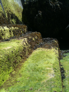 Seaweed for impromptu spa treatments